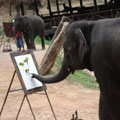 Elephant painting photo