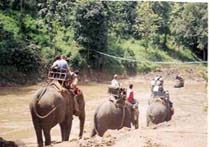 Photo of Elephants for Tours site